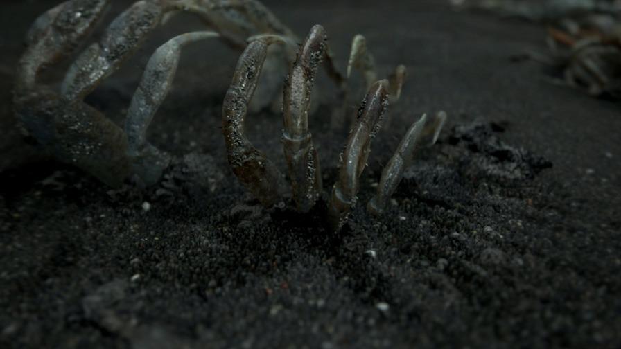死亡擱淺圖片