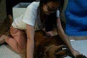 内涵囧图VOL281:妹子,你想过狗狗的感受吗?