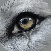 Wolf Online2