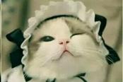 内涵囧图VOL328:多喝热水 真正的猫女仆