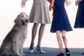 《皇牌空战7》里的这条狗好像有哪里不对劲?