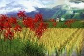 天穗之咲稻姬牙坑道迷宫攻略 敌人等级及掉落物品一览