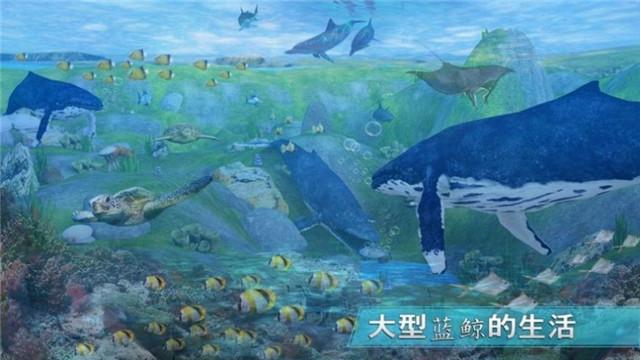 天天养鲸鱼
