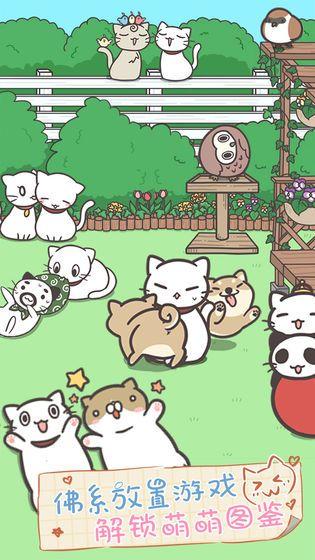 猫咪养生会所