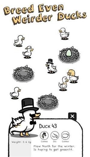 一大堆鸭子