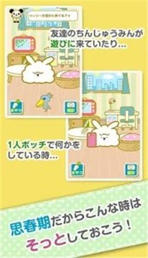 思春期的兔子