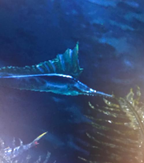 怪物猎人崛起旗鱼钓取位置介绍