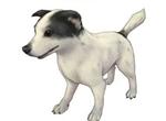 旅行物语宠物小狗怎么样 小狗技能解析及玩法攻略