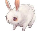 旅行物语兔子技能解析及玩法攻略 旅行物语兔子怎么玩