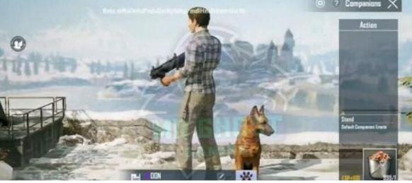 和平精英宠物猎犬获取办法介绍 宠物猎犬怎么获得